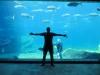 Tshaka-Marine-aquarium-in-Durban-624x468
